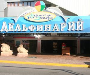 Дельфинарий Морская Звезда Лазаревский